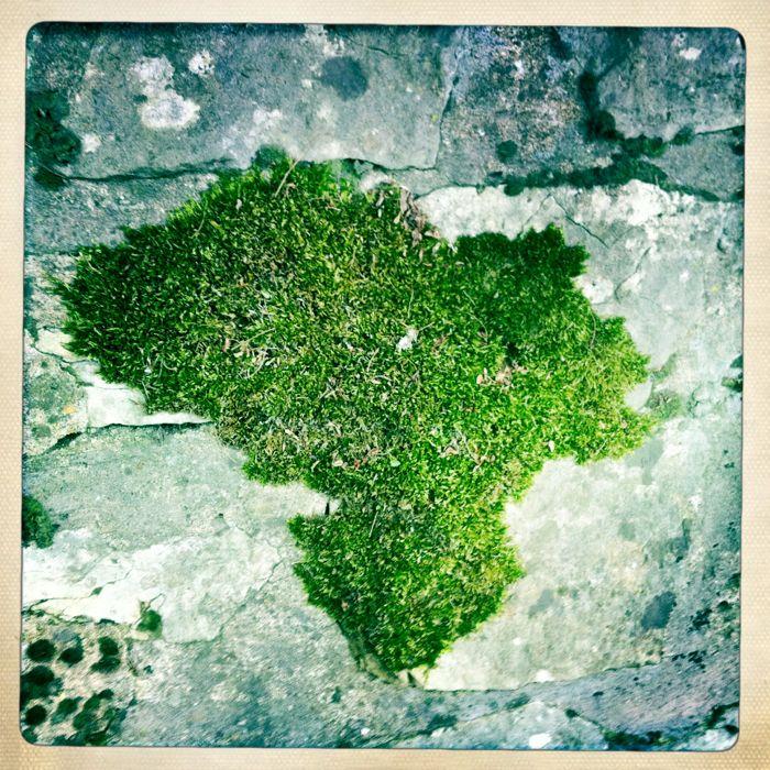 Africa Moss 2011