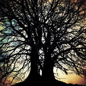 Avebury Crazy Tree