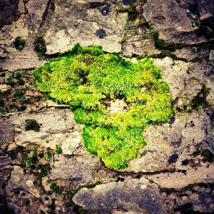 Africa Moss 2012