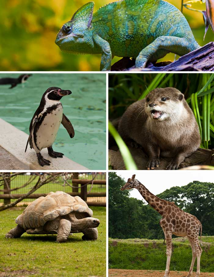 Cotswold Wildlife Park Animals