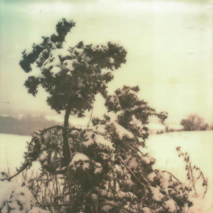 Boars Hill Tree