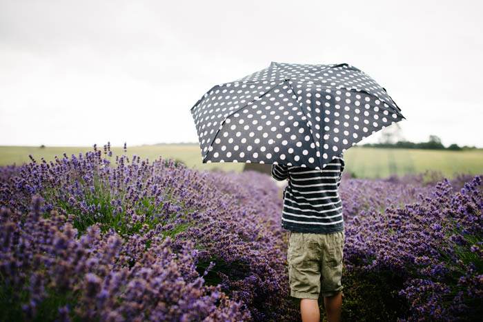 Snowshill Cotswold Lavender